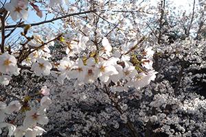 jimugoyomi150401_300