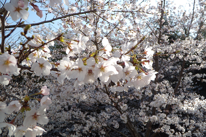jimugoyomi150401_680