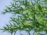 「笹」が繁茂している場所は武家館の跡?